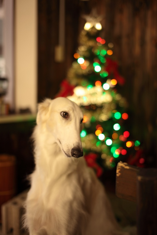 納豆菌…クリスマス…冷たい視線