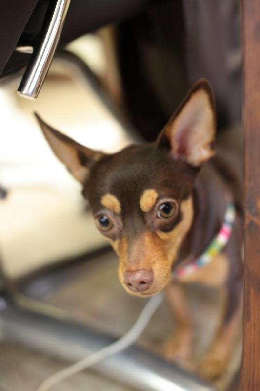 犬の歯石予防