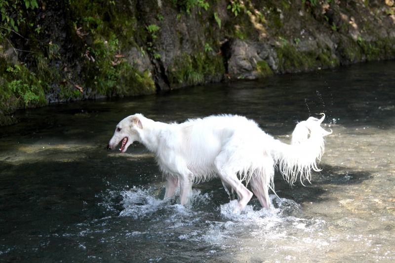 怪談話…尾も白い生き物…